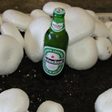 White Buttons growing as big as a beer bottle