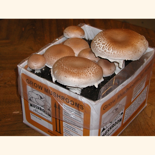 Organic Portabella Mushroom Kit A Complete Easy To Grow At Home Kit Fun Easy By Mushroom Adventures Ship Daily By Fedex